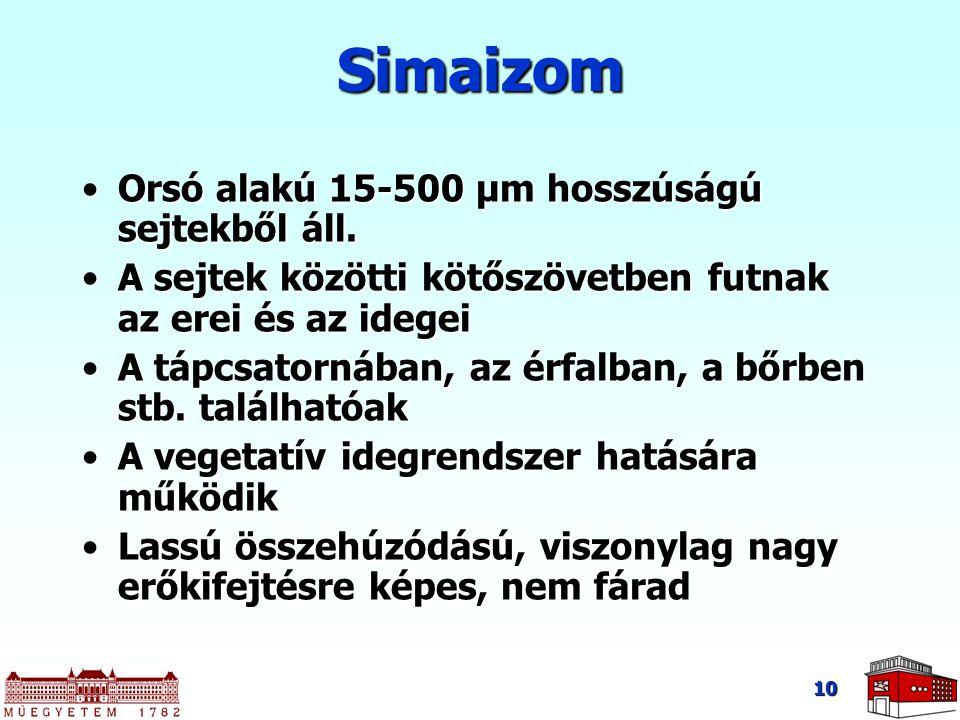 10 Simaizom Orsó alakú 15-500 μm hosszúságú sejtekből áll.Orsó alakú 15-500 μm hosszúságú sejtekből áll. A sejtek közötti kötőszövetben futnak az erei