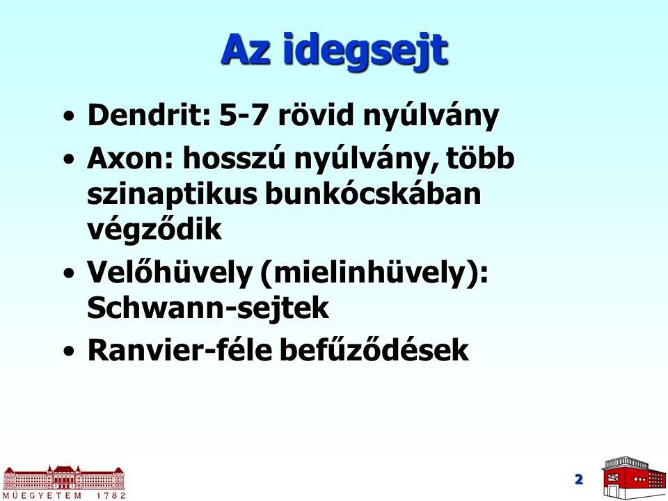 2 Az idegsejt Dendrit: 5-7 rövid nyúlványDendrit: 5-7 rövid nyúlvány Axon: hosszú nyúlvány, több szinaptikus bunkócskában végződikAxon: hosszú nyúlvány, több szinaptikus bunkócskában végződik Velőhüvely (mielinhüvely): Schwann-sejtekVelőhüvely (mielinhüvely): Schwann-sejtek Ranvier-féle befűződésekRanvier-féle befűződések