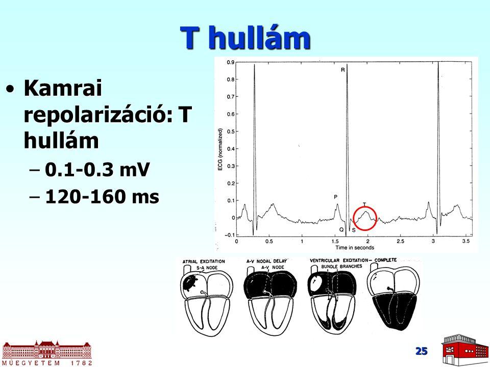 25 Kamrai repolarizáció: T hullámKamrai repolarizáció: T hullám –0.1-0.3 mV –120-160 ms T hullám