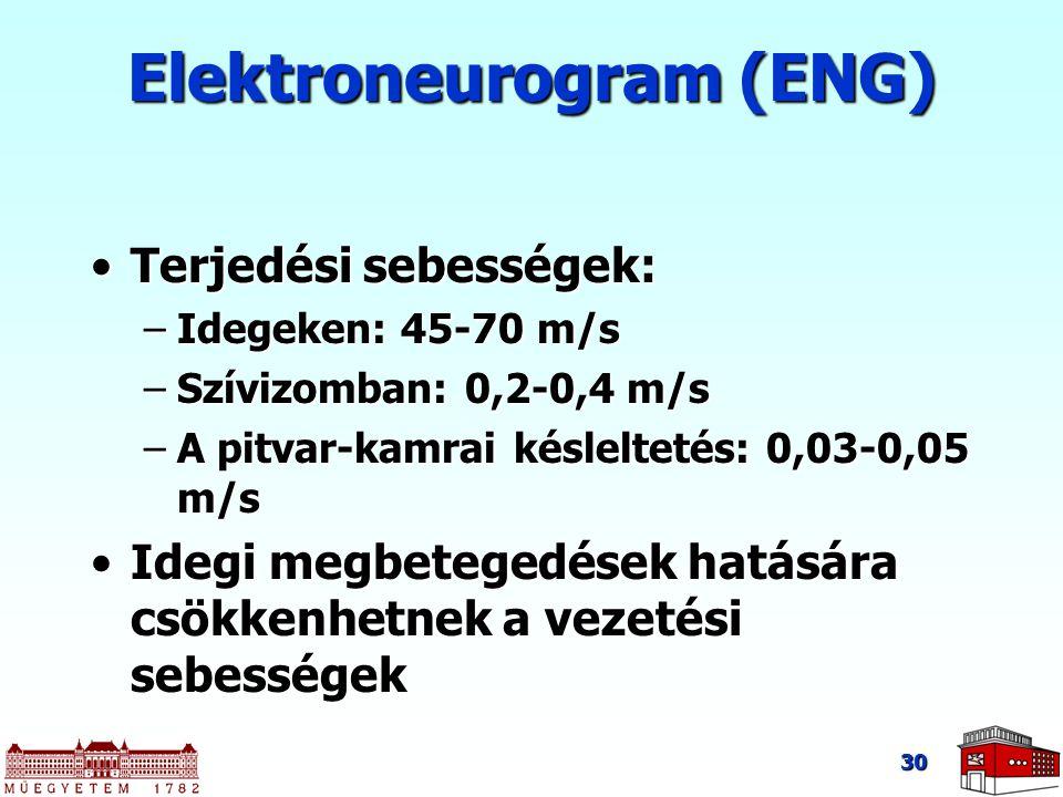 30 Terjedési sebességek:Terjedési sebességek: –Idegeken: 45-70 m/s –Szívizomban: 0,2-0,4 m/s –A pitvar-kamrai késleltetés: 0,03-0,05 m/s Idegi megbetegedések hatására csökkenhetnek a vezetési sebességekIdegi megbetegedések hatására csökkenhetnek a vezetési sebességek Elektroneurogram (ENG)