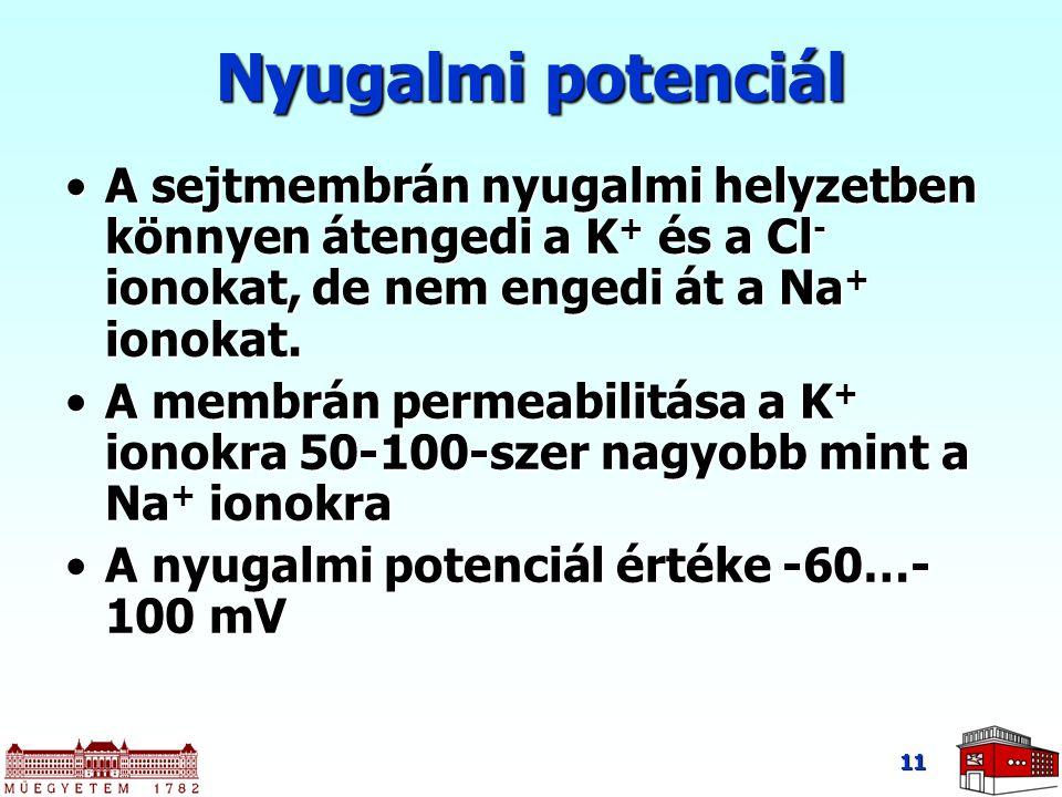 11 Nyugalmi potenciál A sejtmembrán nyugalmi helyzetben könnyen átengedi a K + és a Cl - ionokat, de nem engedi át a Na + ionokat.A sejtmembrán nyugal