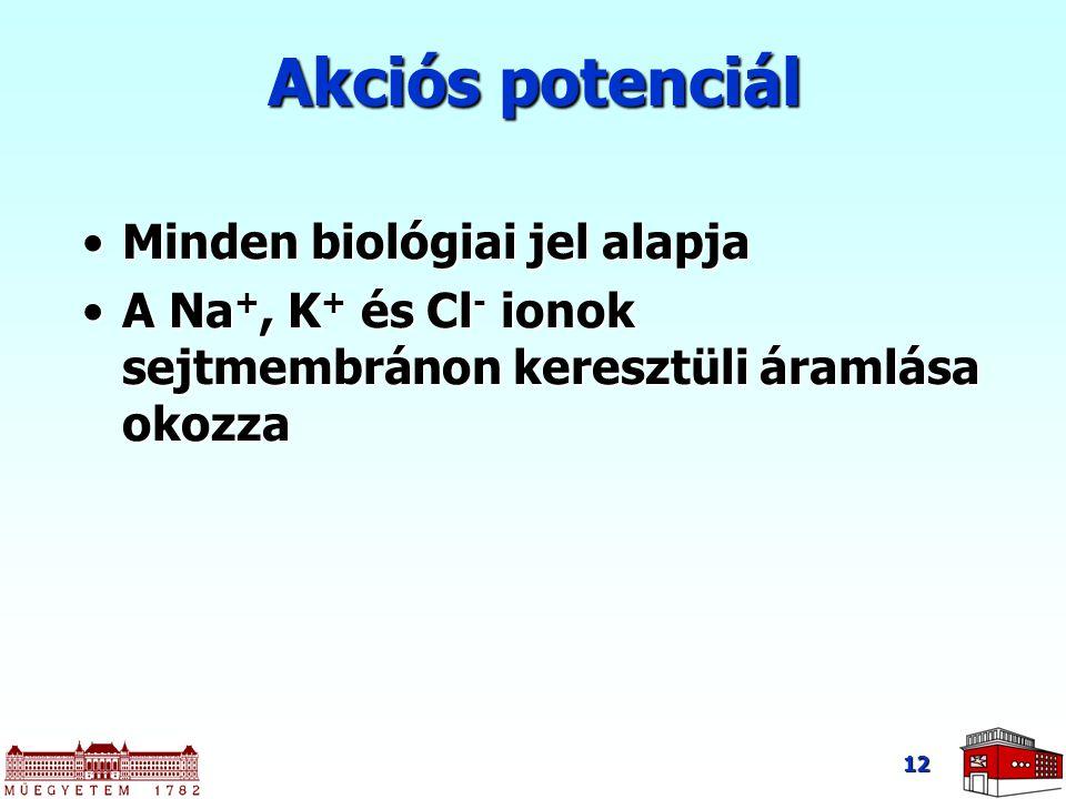 12 Akciós potenciál Minden biológiai jel alapjaMinden biológiai jel alapja A Na +, K + és Cl - ionok sejtmembránon keresztüli áramlása okozzaA Na +, K