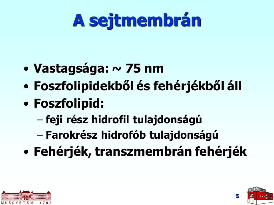 5 A sejtmembrán Vastagsága: ~ 75 nmVastagsága: ~ 75 nm Foszfolipidekből és fehérjékből állFoszfolipidekből és fehérjékből áll Foszfolipid:Foszfolipid: