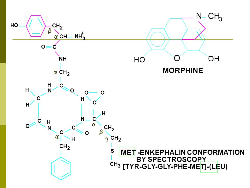 NH HO H N H H O O C C C CH 2 NH 3 CH 2 H N N H H O O S C C C C 3 2 2 2 H O O C + N 3 O OH HO MORPHINE MET -ENKEPHALIN CONFORMATION BY SPECTROSCOPY [TYR-GLY-GLY-PHE-MET]-(LEU)