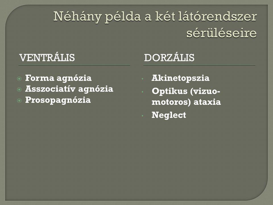 VENTRÁLISDORZÁLIS  Forma agnózia  Asszociatív agnózia  Prosopagnózia Akinetopszia Optikus (vizuo- motoros) ataxia Neglect