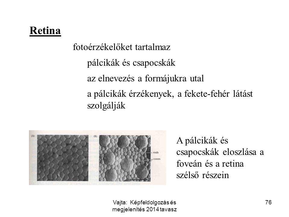 76 Retina fotoérzékelőket tartalmaz pálcikák és csapocskák az elnevezés a formájukra utal a pálcikák érzékenyek, a fekete-fehér látást szolgálják A pá