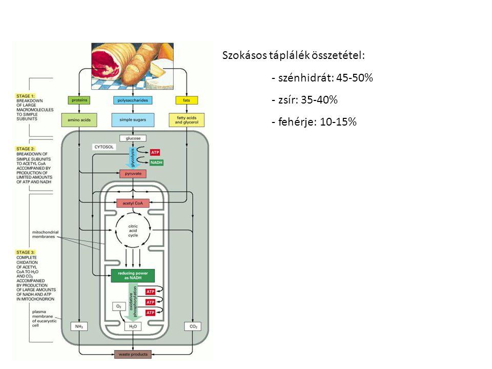 Szokásos táplálék összetétel: - szénhidrát: 45-50% - zsír: 35-40% - fehérje: 10-15%