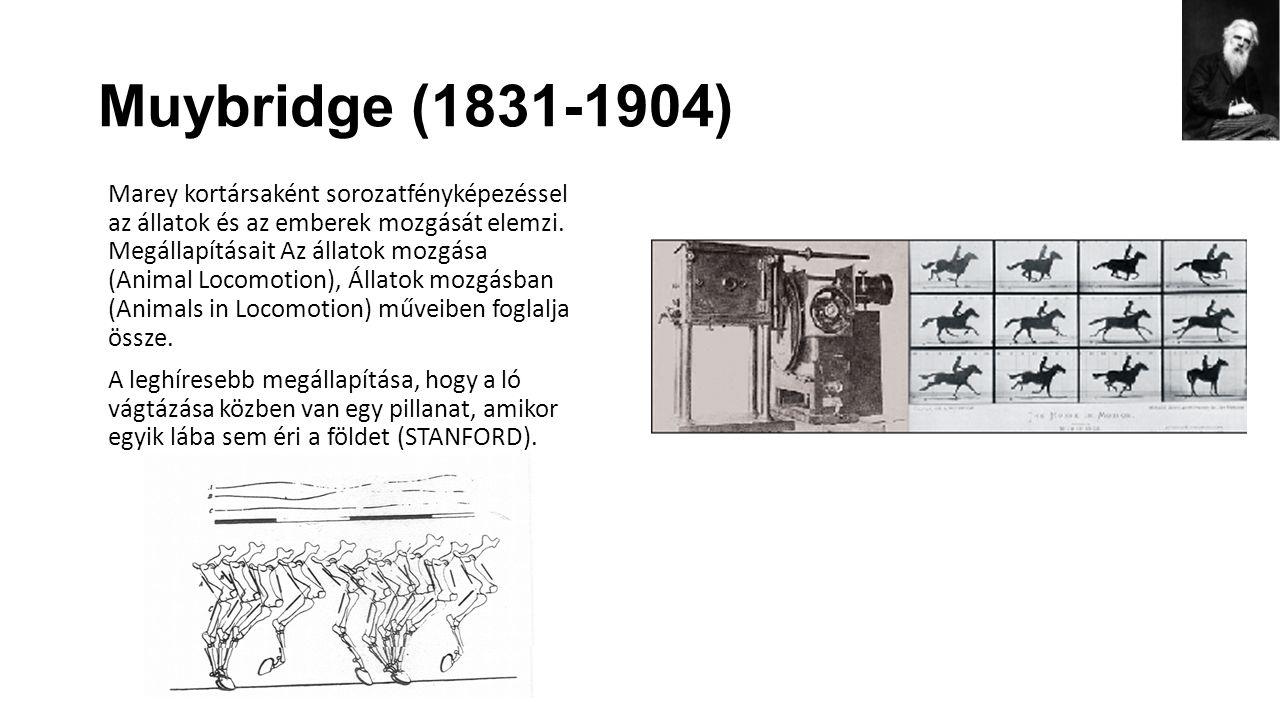 Muybridge (1831-1904) Marey kortársaként sorozatfényképezéssel az állatok és az emberek mozgását elemzi. Megállapításait Az állatok mozgása (Animal Lo