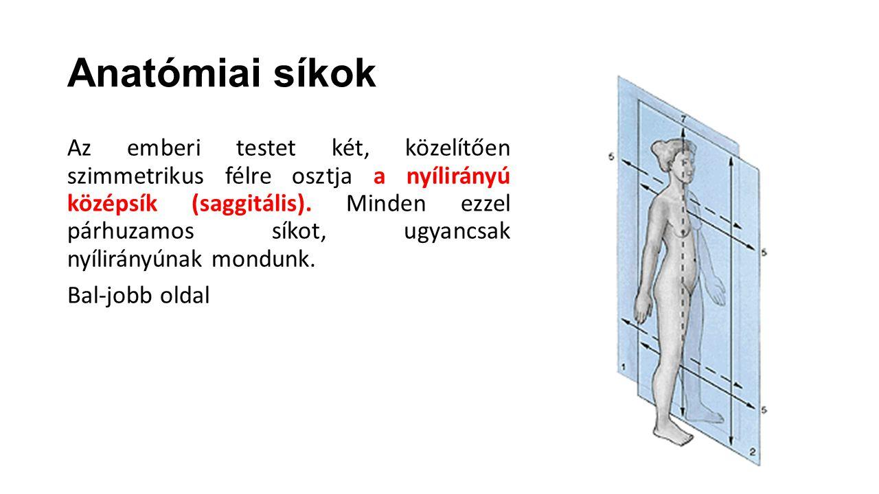 Anatómiai síkok Az emberi testet két, közelítően szimmetrikus félre osztja a nyílirányú középsík (saggitális). Minden ezzel párhuzamos síkot, ugyancsa