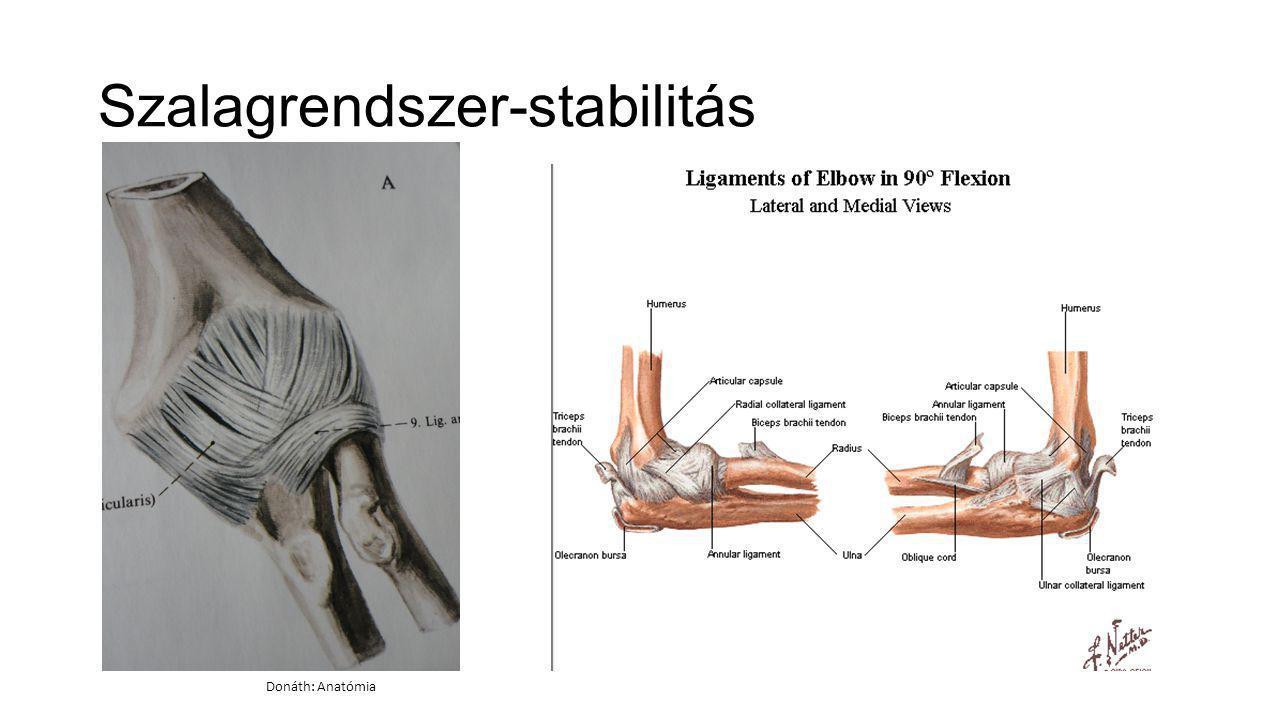 Szalagrendszer-stabilitás Donáth: Anatómia