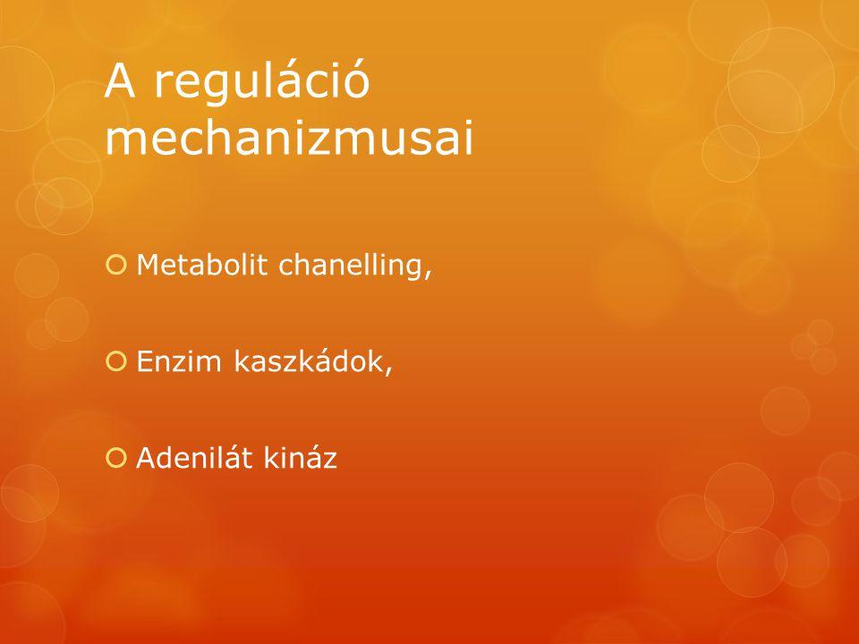 A reguláció mechanizmusai  Metabolit chanelling,  Enzim kaszkádok,  Adenilát kináz