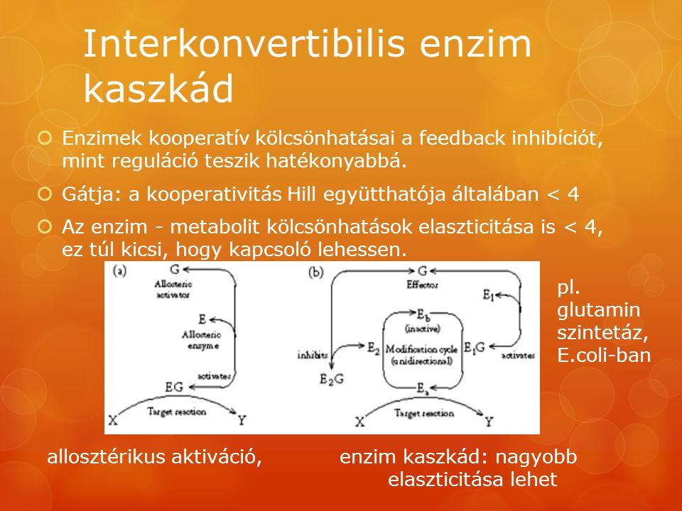 Interkonvertibilis enzim kaszkád  Enzimek kooperatív kölcsönhatásai a feedback inhibíciót, mint reguláció teszik hatékonyabbá.  Gátja: a kooperativi