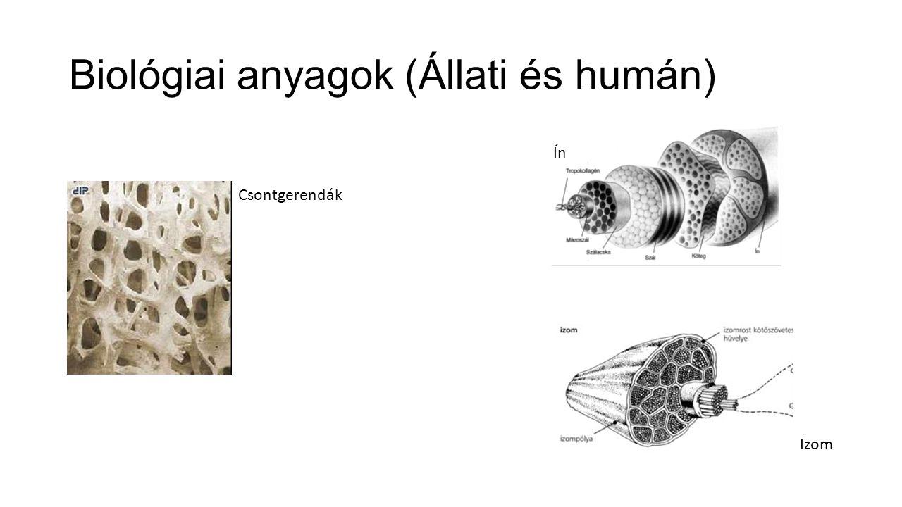 Biológiai anyagok (Állati és humán) Csontgerendák Izom Ín