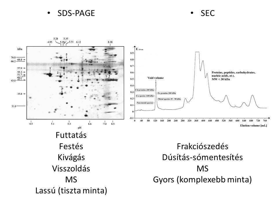 SDS-PAGE Futtatás Festés Kivágás Visszoldás MS Lassú (tiszta minta) SEC Frakciószedés Dúsítás-sómentesítés MS Gyors (komplexebb minta)