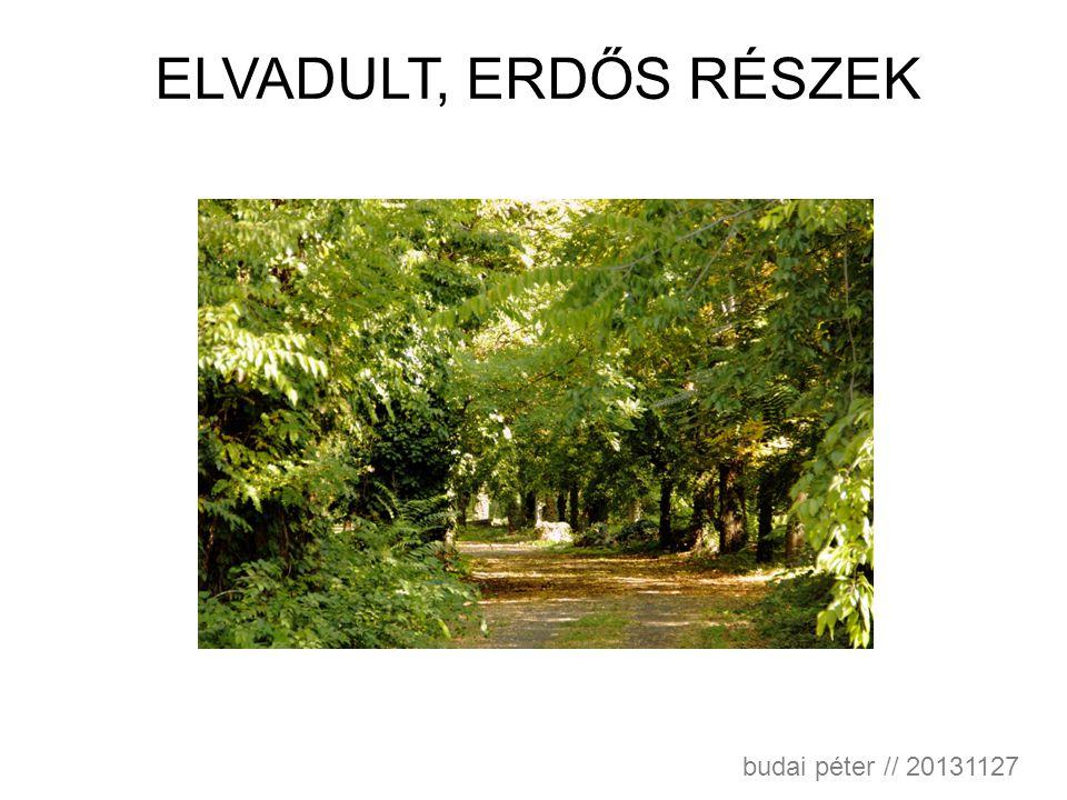ELVADULT, ERDŐS RÉSZEK budai péter // 20131127