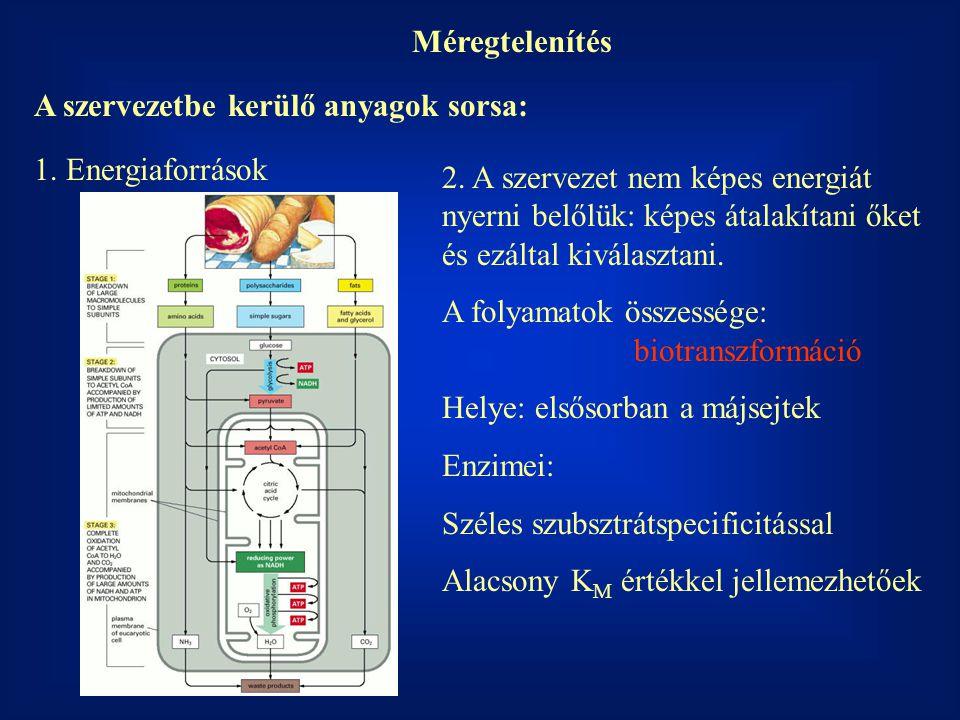 Méregtelenítés A szervezetbe kerülő anyagok sorsa: 1. Energiaforrások 2. A szervezet nem képes energiát nyerni belőlük: képes átalakítani őket és ezál