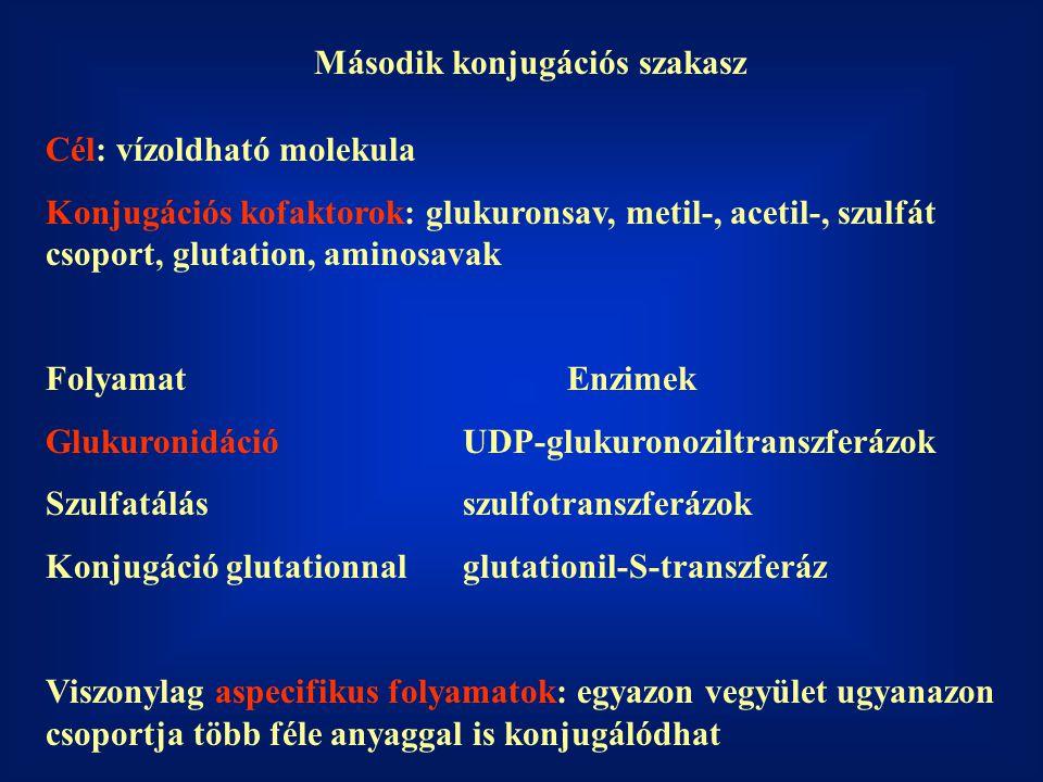 Második konjugációs szakasz Cél: vízoldható molekula Konjugációs kofaktorok: glukuronsav, metil-, acetil-, szulfát csoport, glutation, aminosavak FolyamatEnzimek GlukuronidációUDP-glukuronoziltranszferázok Szulfatálásszulfotranszferázok Konjugáció glutationnalglutationil-S-transzferáz Viszonylag aspecifikus folyamatok: egyazon vegyület ugyanazon csoportja több féle anyaggal is konjugálódhat