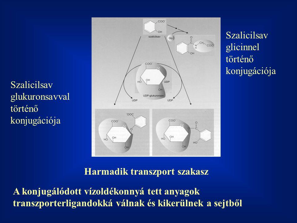 Harmadik transzport szakasz A konjugálódott vízoldékonnyá tett anyagok transzporterligandokká válnak és kikerülnek a sejtből Szalicilsav glukuronsavval történő konjugációja Szalicilsav glicinnel történő konjugációja