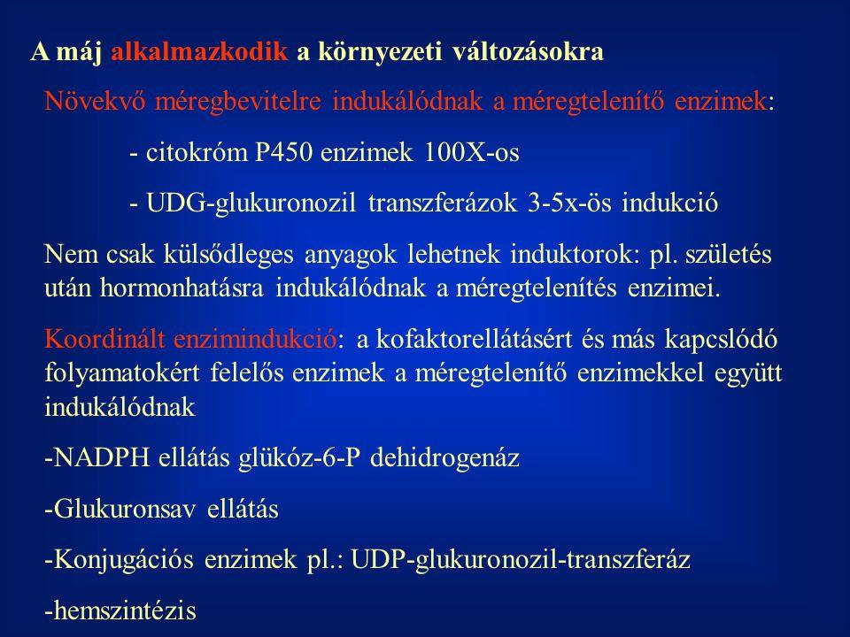 A máj alkalmazkodik a környezeti változásokra Növekvő méregbevitelre indukálódnak a méregtelenítő enzimek: - citokróm P450 enzimek 100X-os - UDG-glukuronozil transzferázok 3-5x-ös indukció Nem csak külsődleges anyagok lehetnek induktorok: pl.