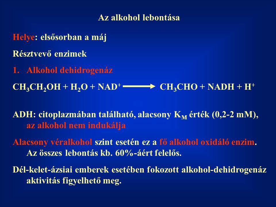 Az alkohol lebontása Helye: elsősorban a máj Résztvevő enzimek 1.Alkohol dehidrogenáz CH 3 CH 2 OH + H 2 O + NAD + CH 3 CHO + NADH + H + ADH: citoplazmában található, alacsony K M érték (0,2-2 mM), az alkohol nem indukálja Alacsony véralkohol szint esetén ez a fő alkohol oxidáló enzim.