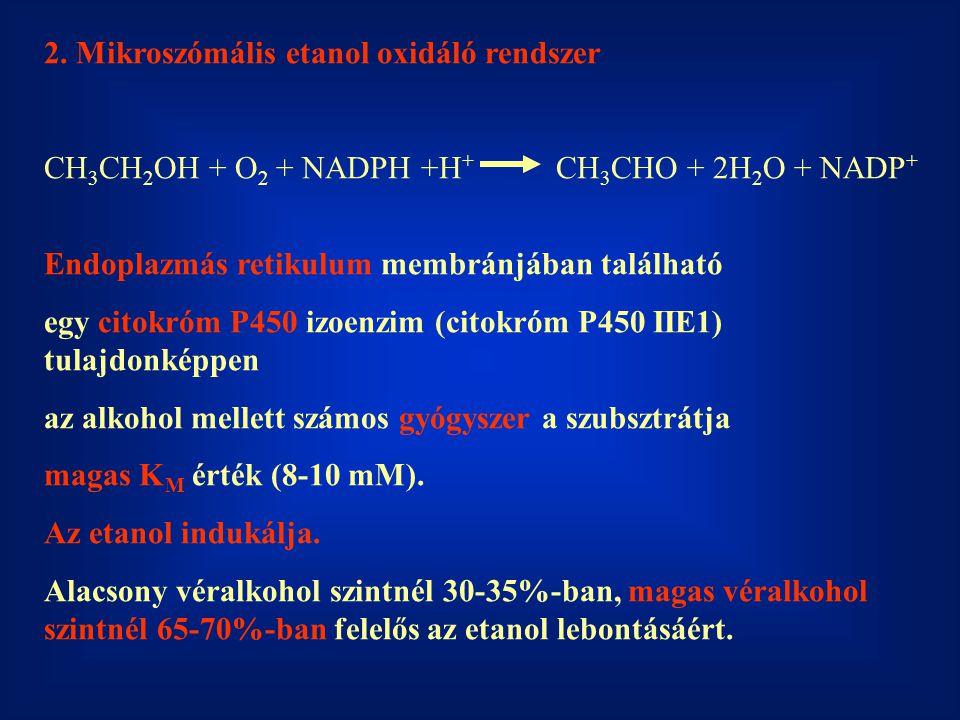 2. Mikroszómális etanol oxidáló rendszer CH 3 CH 2 OH + O 2 + NADPH +H + CH 3 CHO + 2H 2 O + NADP + Endoplazmás retikulum membránjában található egy c