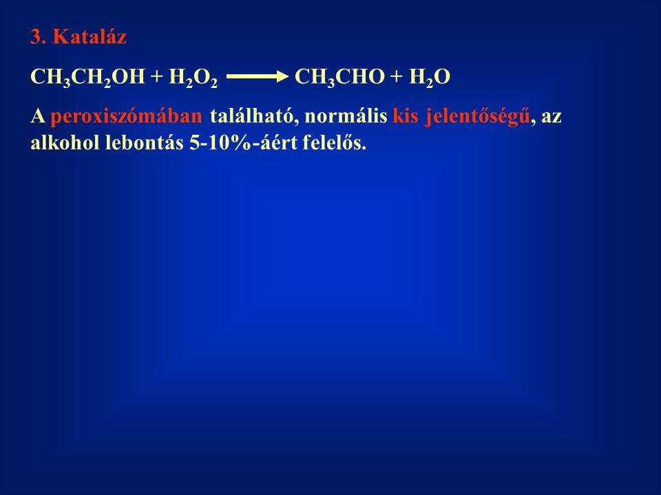 3. Kataláz CH 3 CH 2 OH + H 2 O 2 CH 3 CHO + H 2 O A peroxiszómában található, normális kis jelentőségű, az alkohol lebontás 5-10%-áért felelős.
