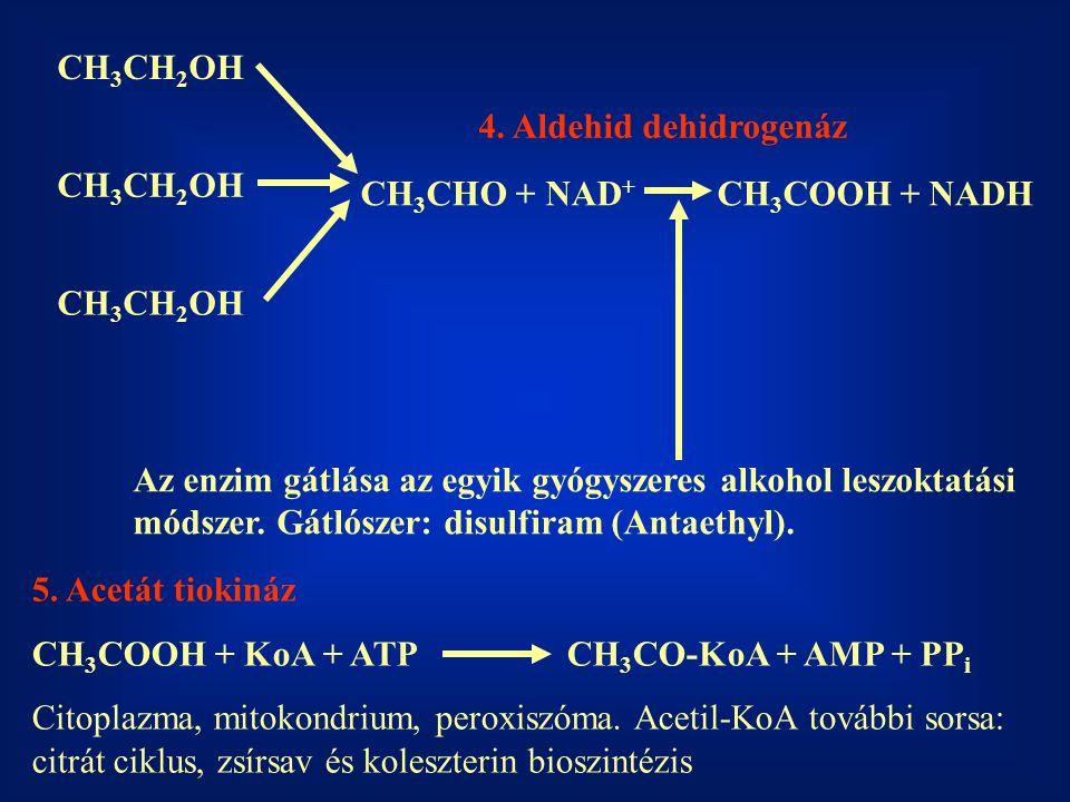 CH 3 CH 2 OH CH 3 CHO + NAD + CH 3 COOH + NADH 4. Aldehid dehidrogenáz Az enzim gátlása az egyik gyógyszeres alkohol leszoktatási módszer. Gátlószer: