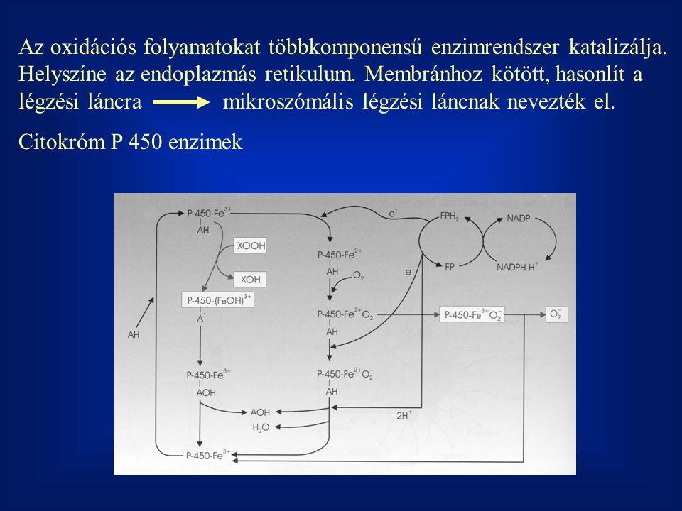 Az oxidációs folyamatokat többkomponensű enzimrendszer katalizálja. Helyszíne az endoplazmás retikulum. Membránhoz kötött, hasonlít a légzési láncrami