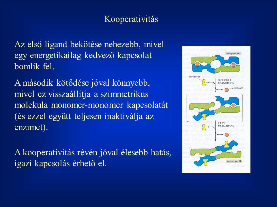 Kooperativitás Az első ligand bekötése nehezebb, mivel egy energetikailag kedvező kapcsolat bomlik fel. A második kötődése jóval könnyebb, mivel ez vi