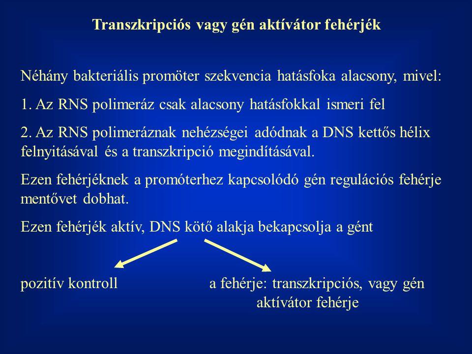 Transzkripciós vagy gén aktívátor fehérjék Néhány bakteriális promöter szekvencia hatásfoka alacsony, mivel: 1. Az RNS polimeráz csak alacsony hatásfo