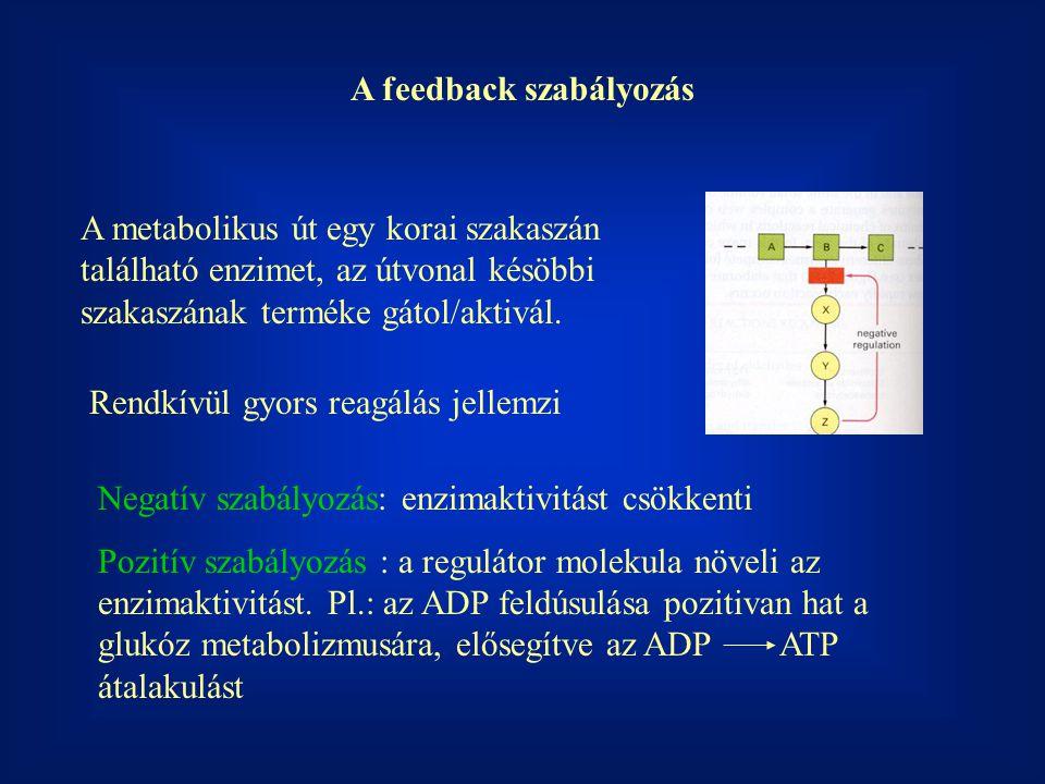 A feedback szabályozás A metabolikus út egy korai szakaszán található enzimet, az útvonal késöbbi szakaszának terméke gátol/aktivál. Rendkívül gyors r
