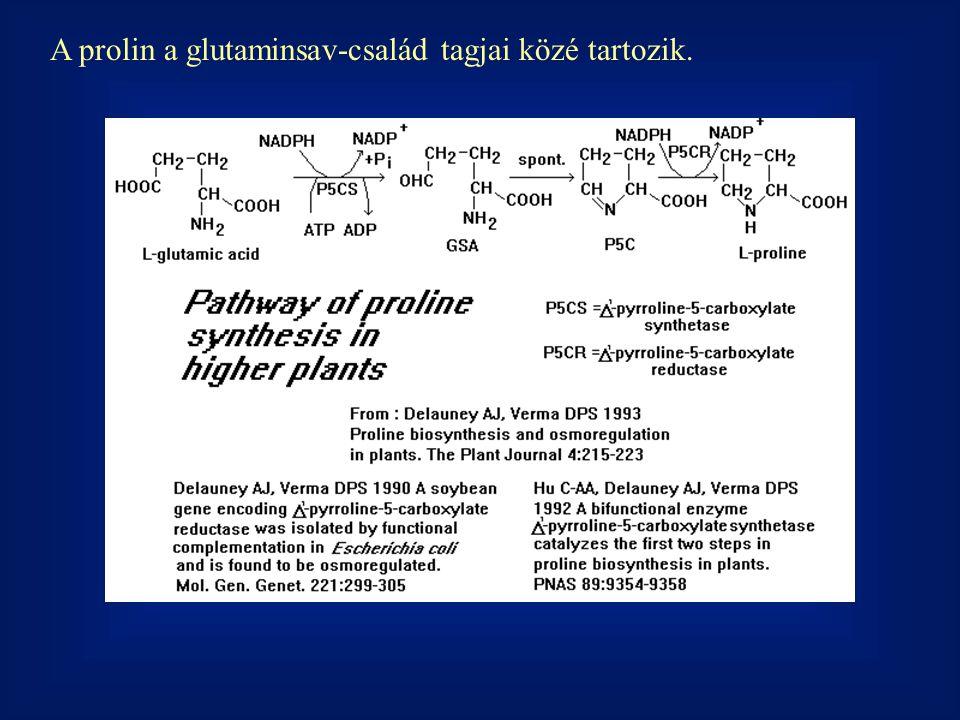 A prolin a glutaminsav-család tagjai közé tartozik.
