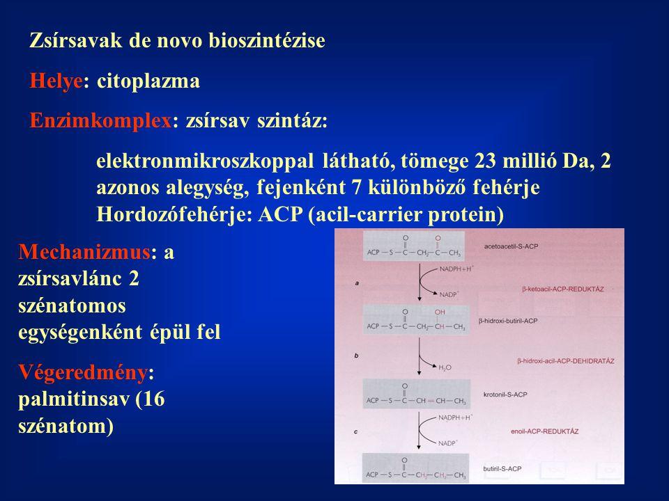 Zsírsavak de novo bioszintézise Helye: citoplazma Enzimkomplex: zsírsav szintáz: elektronmikroszkoppal látható, tömege 23 millió Da, 2 azonos alegység, fejenként 7 különböző fehérje Hordozófehérje: ACP (acil-carrier protein) Mechanizmus: a zsírsavlánc 2 szénatomos egységenként épül fel Végeredmény: palmitinsav (16 szénatom)