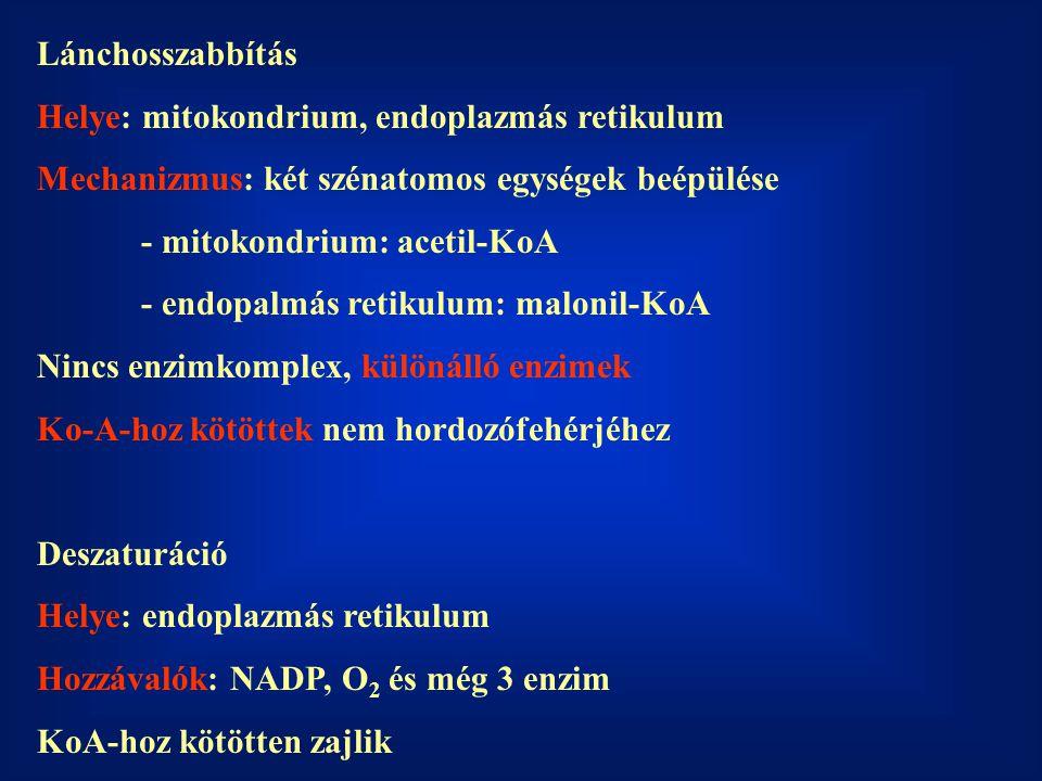 Lánchosszabbítás Helye: mitokondrium, endoplazmás retikulum Mechanizmus: két szénatomos egységek beépülése - mitokondrium: acetil-KoA - endopalmás retikulum: malonil-KoA Nincs enzimkomplex, különálló enzimek Ko-A-hoz kötöttek nem hordozófehérjéhez Deszaturáció Helye: endoplazmás retikulum Hozzávalók: NADP, O 2 és még 3 enzim KoA-hoz kötötten zajlik