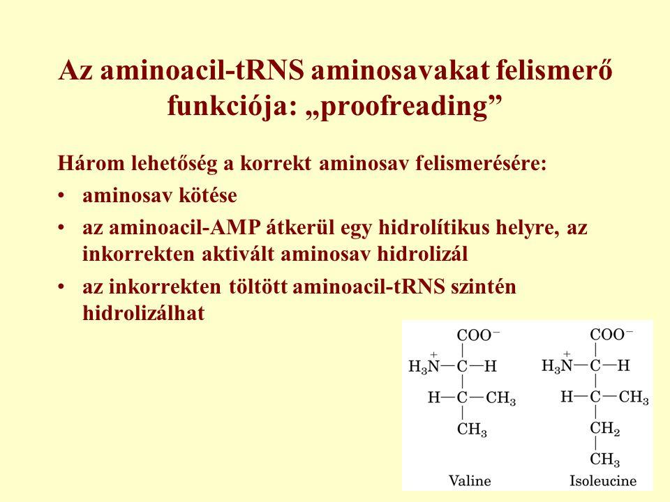 """Az aminoacil-tRNS aminosavakat felismerő funkciója: """"proofreading"""" Három lehetőség a korrekt aminosav felismerésére: aminosav kötése az aminoacil-AMP"""