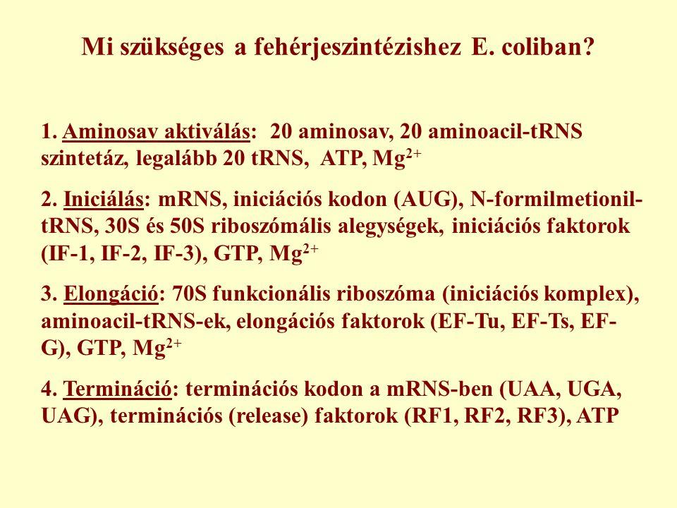 Mi szükséges a fehérjeszintézishez E. coliban? 1. Aminosav aktiválás: 20 aminosav, 20 aminoacil-tRNS szintetáz, legalább 20 tRNS, ATP, Mg 2+ 2. Iniciá