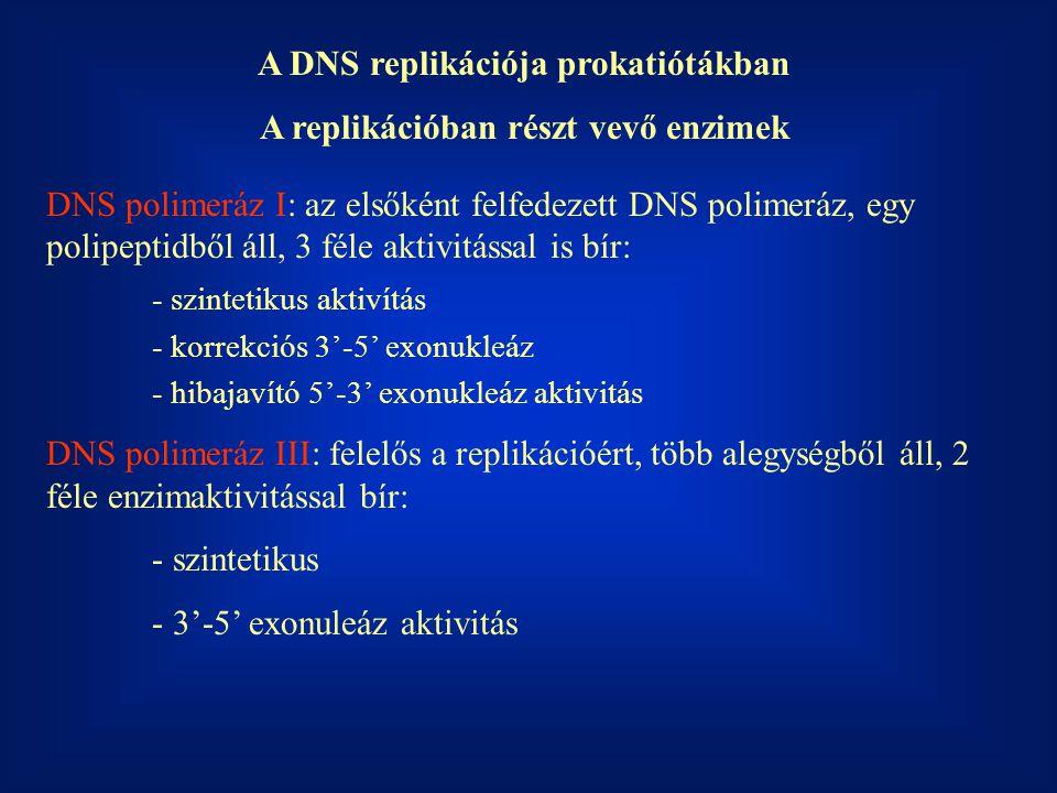 A DNS replikációja prokatiótákban A replikációban részt vevő enzimek DNS polimeráz I: az elsőként felfedezett DNS polimeráz, egy polipeptidből áll, 3