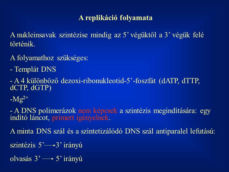 A replikáció folyamata A nukleinsavak szintézise mindig az 5' végüktől a 3' végük felé történik. A folyamathoz szükséges: - Templát DNS - A 4 különböz