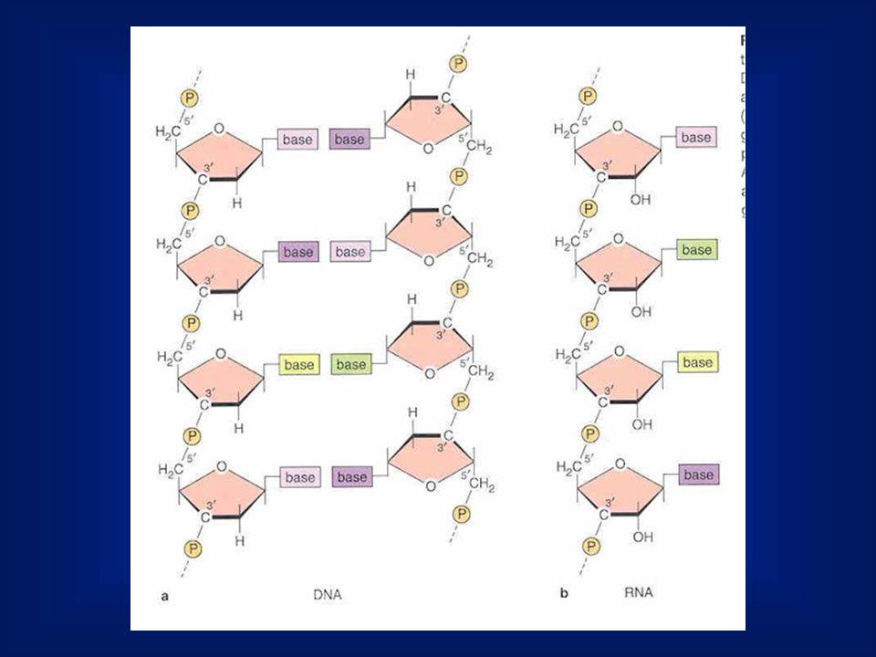 Az eukarióta kromoszóma szerveződése nukleoszóma