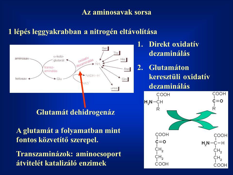 Az aminosavak sorsa 1 lépés leggyakrabban a nitrogén eltávolítása A glutamát a folyamatban mint fontos közvetítő szerepel.