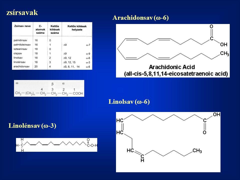 zsírsavak Linolsav (  -6) Arachidonsav (  -6) Linolénsav (  -3)