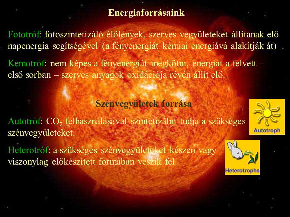 Energiaforrásaink Fototróf: fotoszintetizáló élőlények, szerves vegyületeket állítanak elő napenergia segítségével (a fényenergiát kémiai energiává al