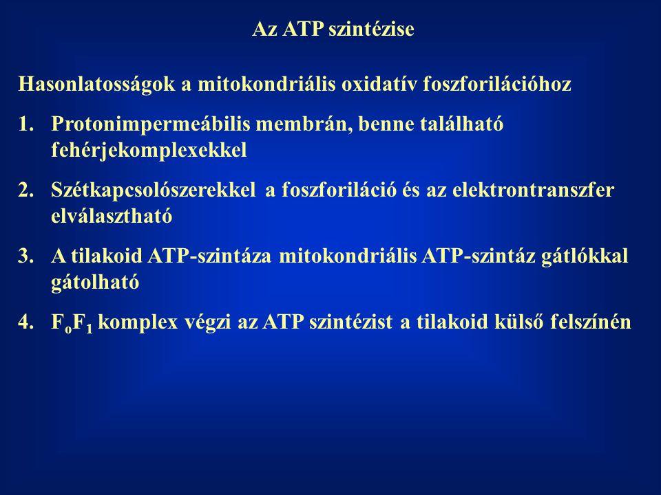 Az ATP szintézise Hasonlatosságok a mitokondriális oxidatív foszforilációhoz 1.Protonimpermeábilis membrán, benne található fehérjekomplexekkel 2.Szét