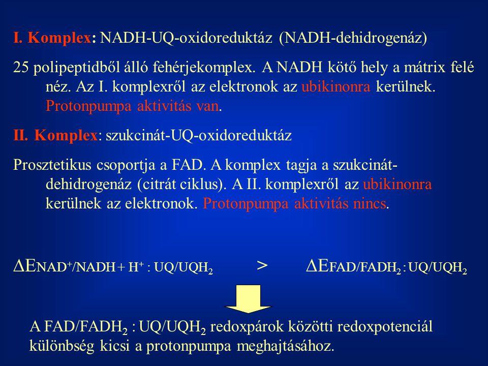 I. Komplex: NADH-UQ-oxidoreduktáz (NADH-dehidrogenáz) 25 polipeptidből álló fehérjekomplex. A NADH kötő hely a mátrix felé néz. Az I. komplexről az el
