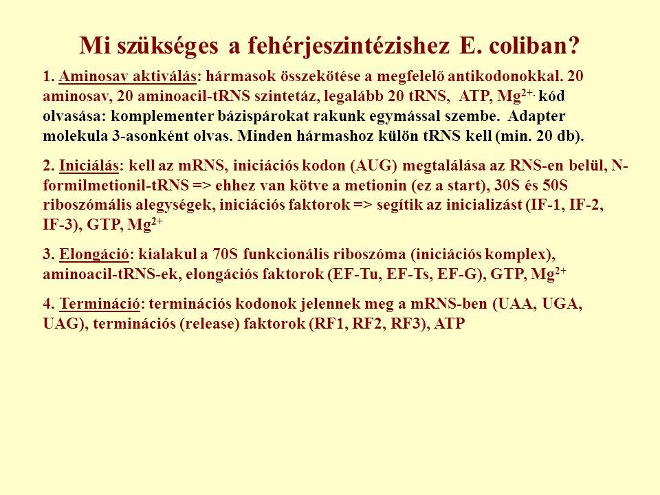 Mi szükséges a fehérjeszintézishez E.coliban. 1.