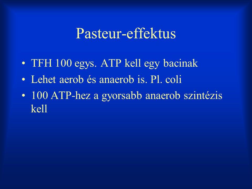 Pasteur-effektus TFH 100 egys. ATP kell egy bacinak Lehet aerob és anaerob is. Pl. coli 100 ATP-hez a gyorsabb anaerob szintézis kell