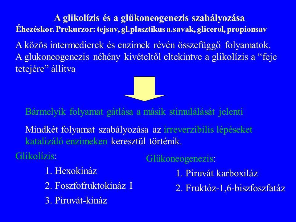 A glikolízis és a glükoneogenezis szabályozása A közös intermedierek és enzimek révén összefüggő folyamatok. A glukoneogenezis néhény kivételtől eltek
