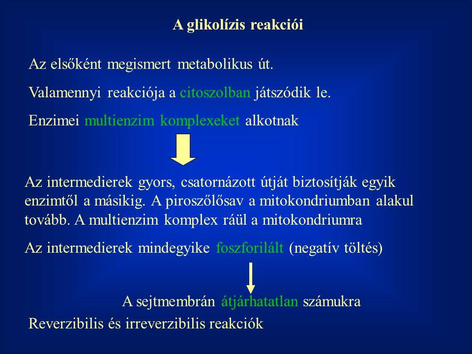 A glikolízis reakciói Az elsőként megismert metabolikus út. Valamennyi reakciója a citoszolban játszódik le. Enzimei multienzim komplexeket alkotnak A