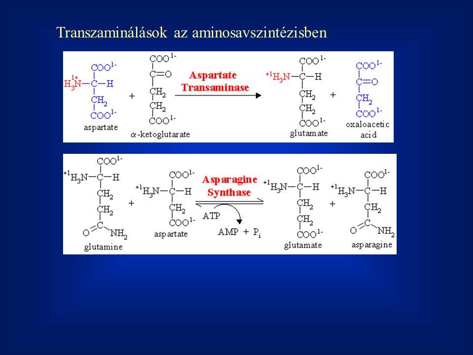 Transzaminálások az aminosavszintézisben