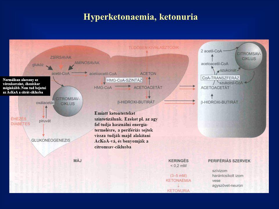 Hyperketonaemia, ketonuria Normálisan alacsony az vércukorszint, éhezéskor méginkább.